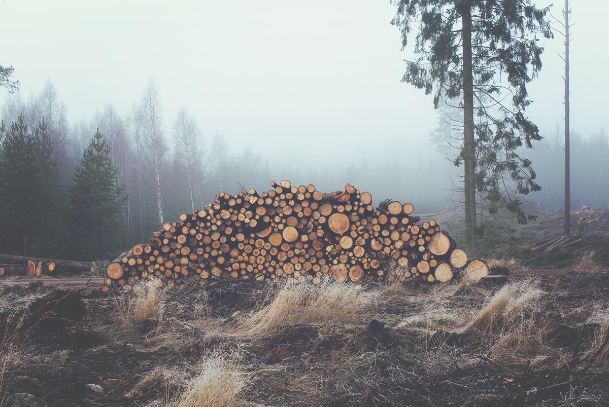 Smålands Skog